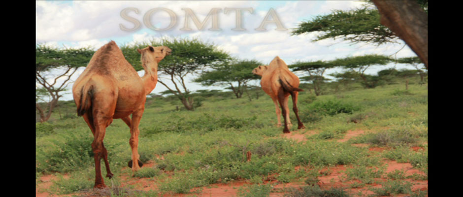Somta-1